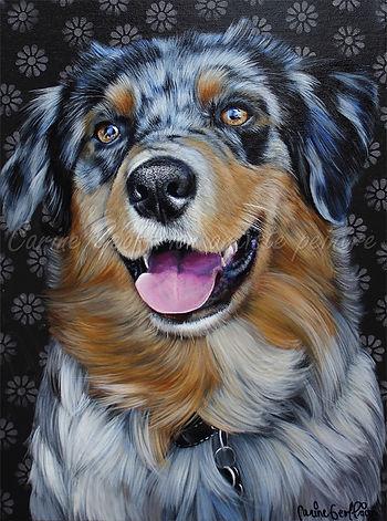 Toile chien berger australien, artiste peintre animalier québécoise