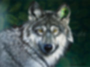 Peinture loup toile wolf artiste peintre