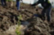 Coordenação de implementação - Projecto Rio de Mel 2019 SCML P´remio Santa Casa florestação