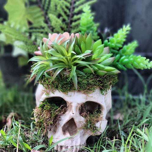 Skull Planter with No Kill Succulents #10
