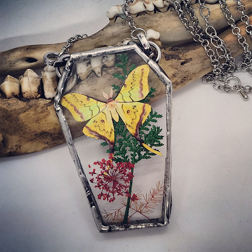 Soldered Glass with Moon Moth Replica & Dried Floral