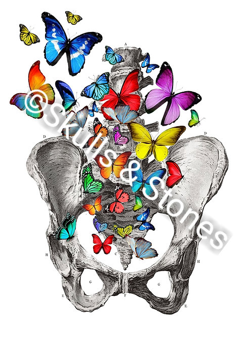 Skeleton Hips & Spine with Butterflies Print - Matted