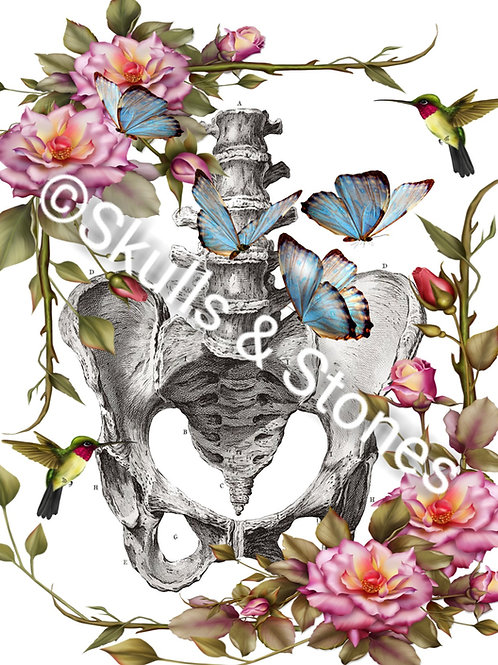 Vintage Skeleton Hip & Spine Print - Matted