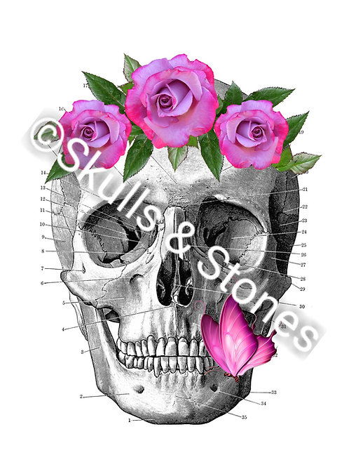 Vintage Skull with Pink Flowers - Matted