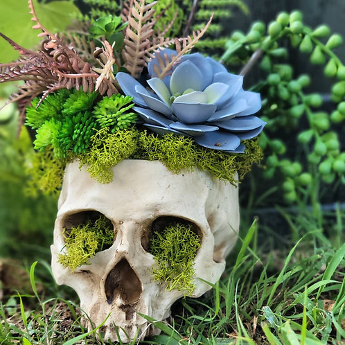 Skull Planter with No Kill Succulents #9