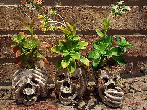See No - Hear No - Speak No Evil Skulls Set