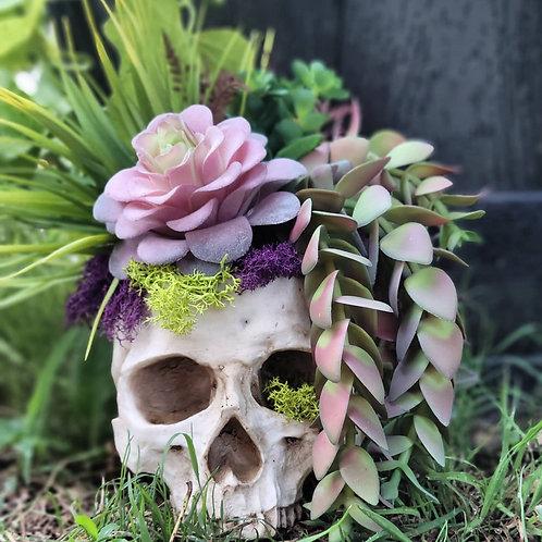 Skull Planter with No Kill Succulents #8