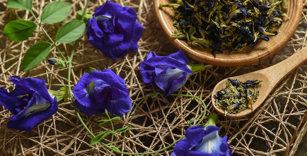 Blue Butterfly Pea flowers are known for its amazing health benefits and blue colouring | My Blue Tea