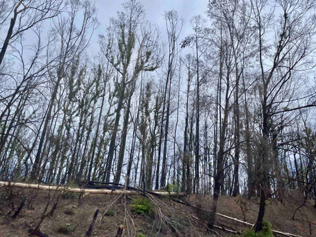 Reviving Australia - Life after Fire