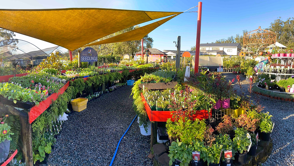 Greenbourne Nursery, Wauchope, feature story by Brilliant-Online