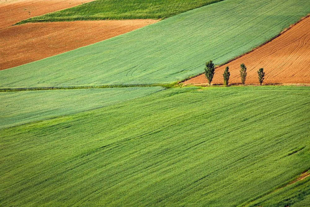 Image of agriculture fields. Samso Insights