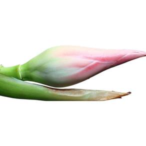 The Goodness of Torch Ginger Flower Bud (Bunga Kantan)