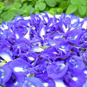 What Butterfly Blue Pea Flower does to you