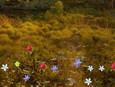 Lifeline Unveils Virtual Garden for World Suicide Prevention Month