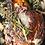 Thumbnail: Bone In Rib(eye) Steak