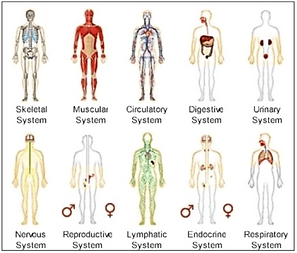 Body systems.png
