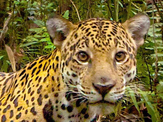 Biodiversidad y Fauna Silvestre