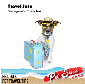 Pet Talk TravelSafe.png