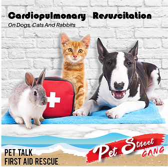 Pet Talk cardiopulmonary resuscitation.p