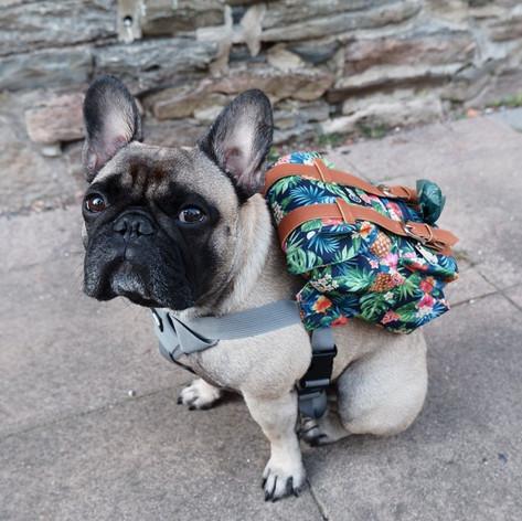 Dapper Dog Bag Packs