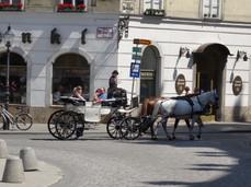 Paardentour Wenen