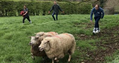 Gaelic Games schapen drijven