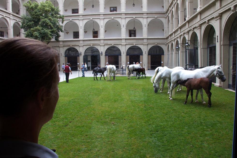 Wenen Spaanse Rijschool