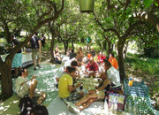Picknicklunch onder de bomen
