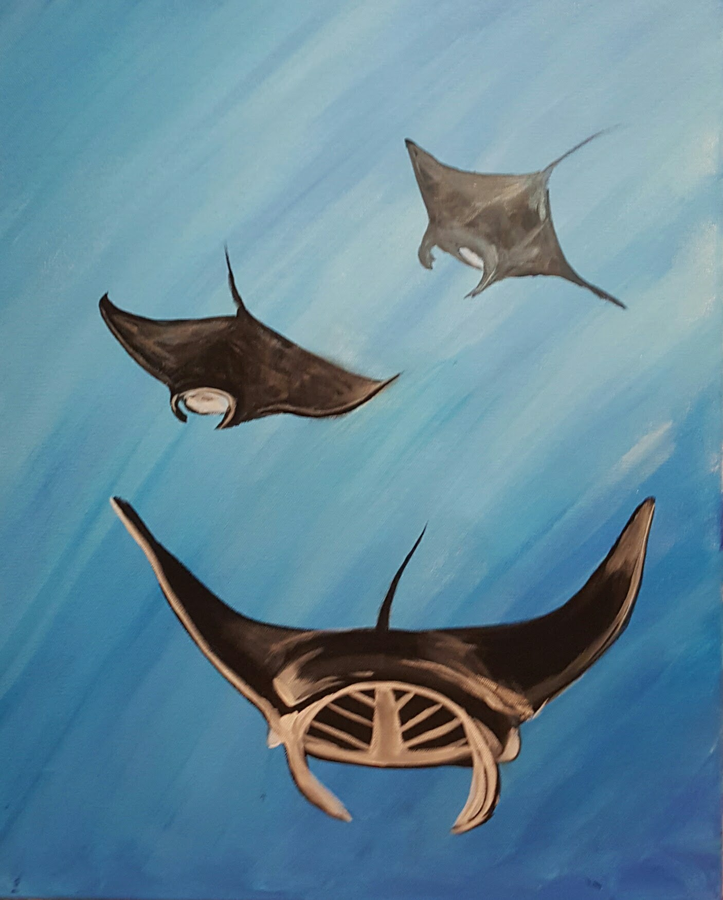 Sting Ray Family