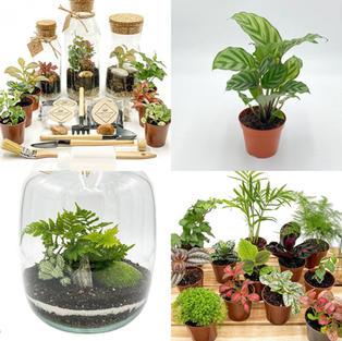 Forest Jar London