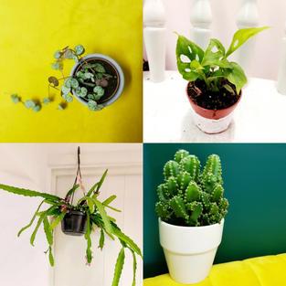 Pretty Cactus Plants