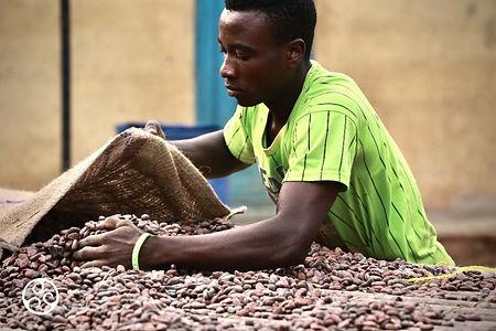 cocoa horizons farmer.jpg