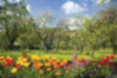 Spring-flowers-fruit-trees-bloom.jpg
