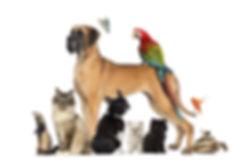 Pet mixture.jpg