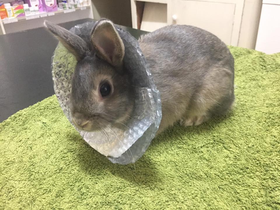 Tinfoil Rabbit.jpg