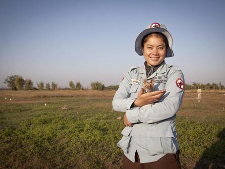 Hero Rats of Cambodia