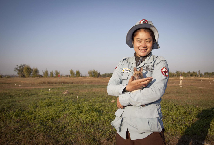 Cambodian lady in protective clothing holds a Tanzanian Giant-pouched rat in a Cambodian minefield