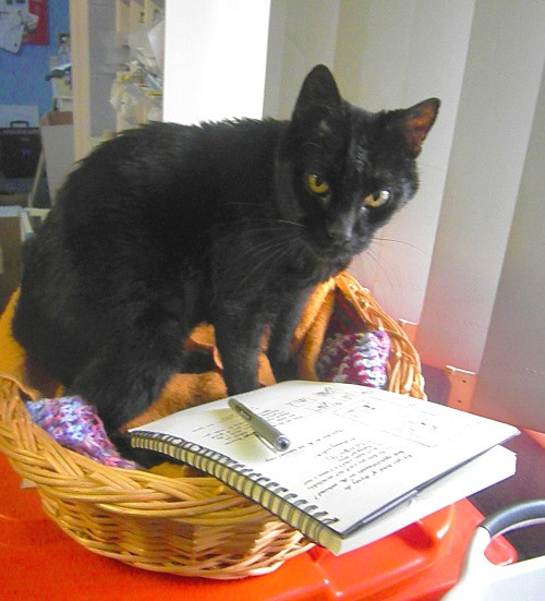 Black cat Hugo sits in front of his notebook and pencil and seems unhappy to have been caught writing