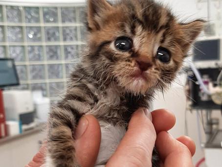 Hugo talks the whole kitten kaboodle