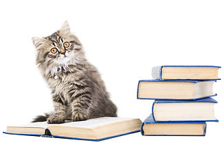 Kitten with books small.jpg