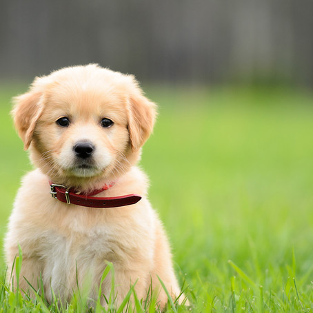 Puppy scams on the rise