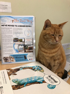 Tanunda Ginger Clinic Cat with Newslette