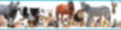Website Calendar Header.jpg