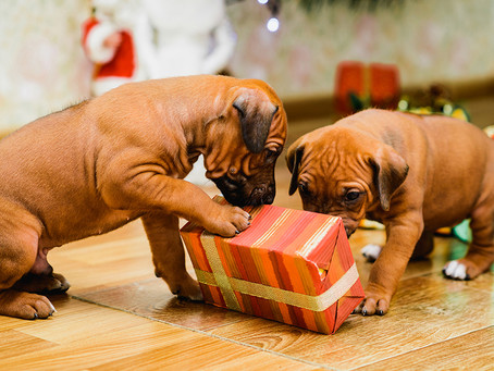 Do you buy presents for pets?
