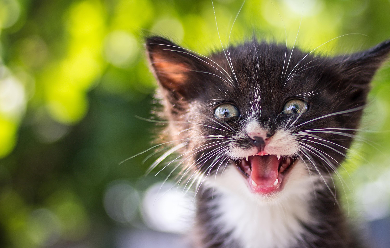 happy surprised kitten smaller