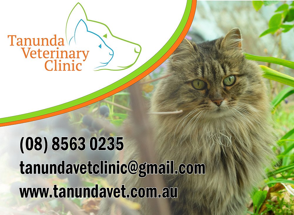 Advertising signage for Tanunda Vet Clinic