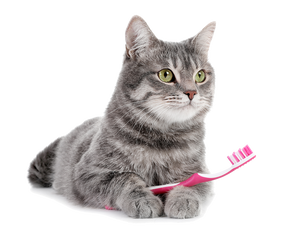 Grey short haired cat lays facing forward with a pink toothbrush in its paws