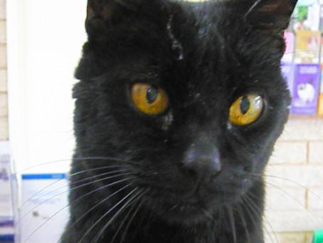 Hugo talks cats and vets