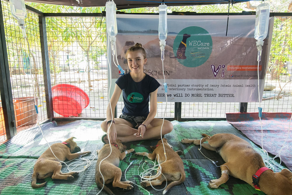 Female English Vet watches over 4 street dogs recovering from surgery in a Sri Lankan pet hospital