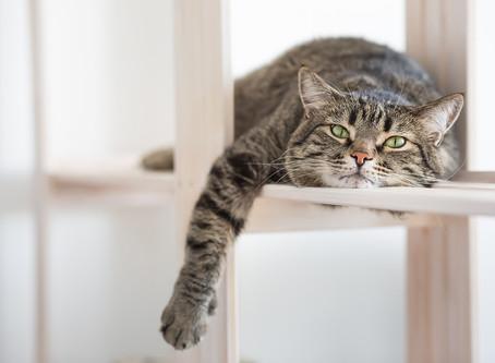 Hugo & the kitten kaboodle of indoor cats